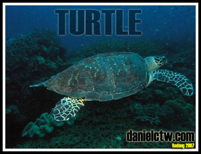Turtle Redang