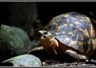 Box Tortoise
