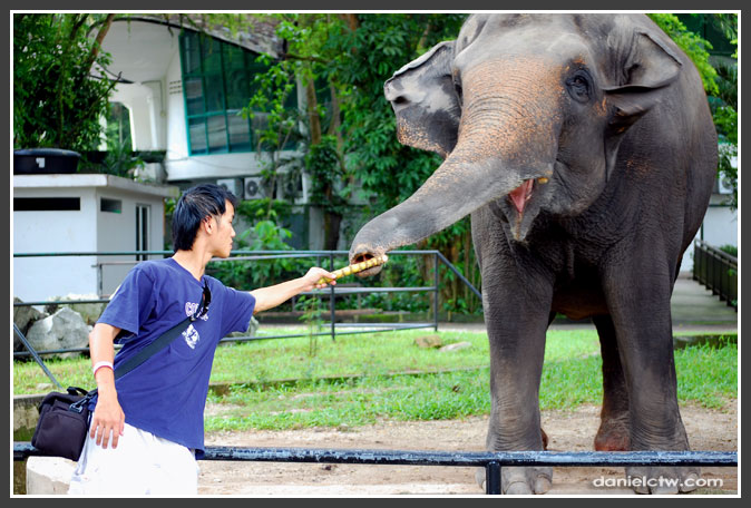 Daniel Feeding The Elephants