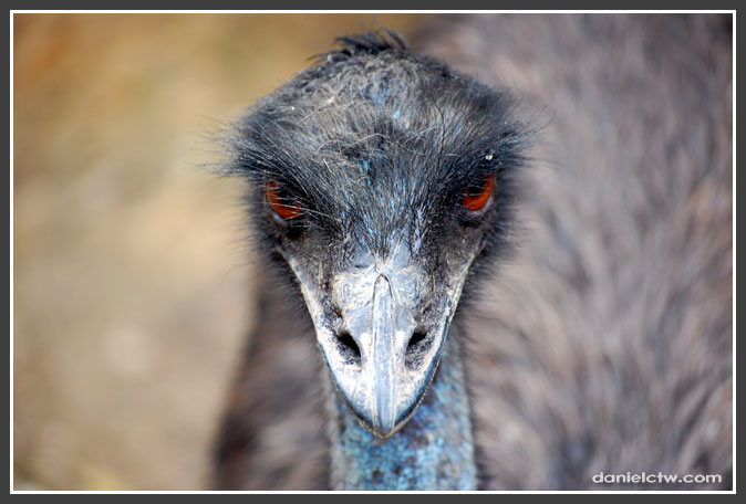 If emu Could Kill