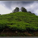 Photoshoot in Cameron Highlands