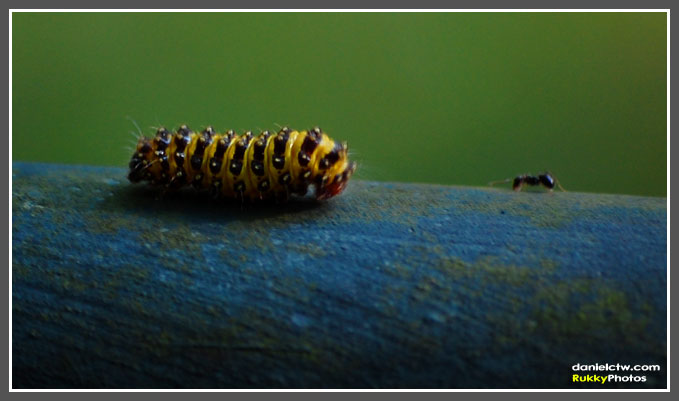Caterpillar with Ant