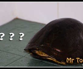 tortoise Visitor