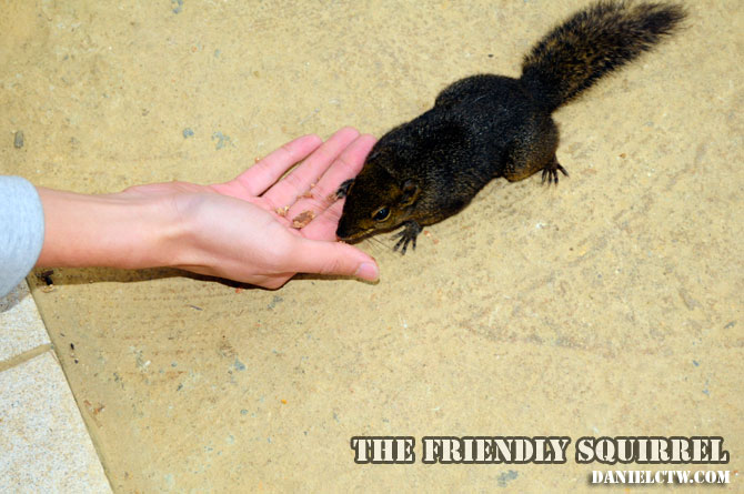 Your Friendly Neigborhood Kinabalu Squirrel