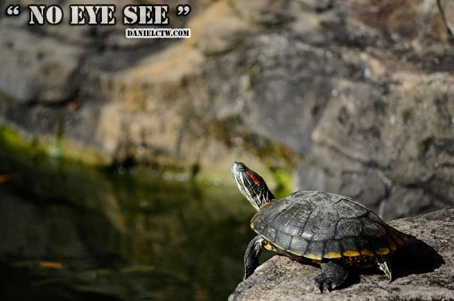 Turtle No Eye See Us