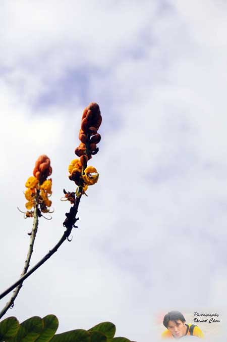 Flower With Sky Background