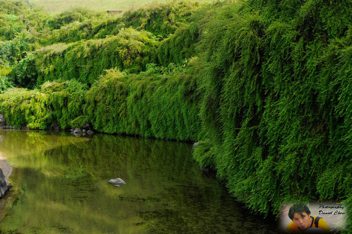 Relaxing Green Color Scenery