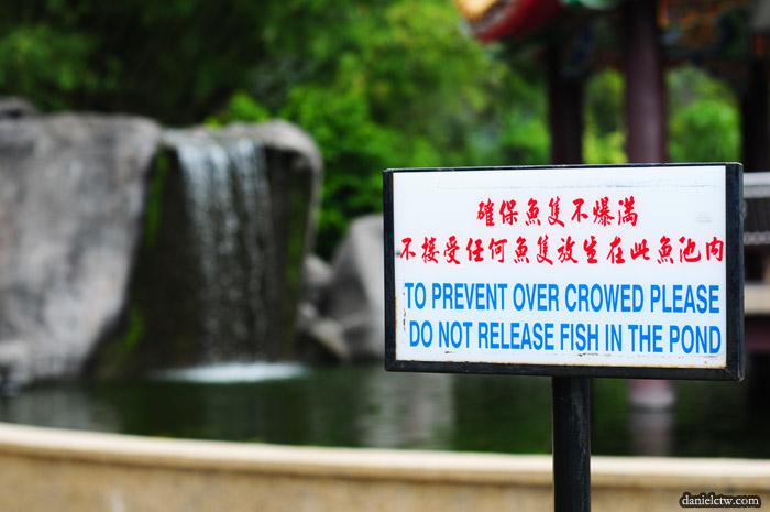 Fish Pond Bokeh