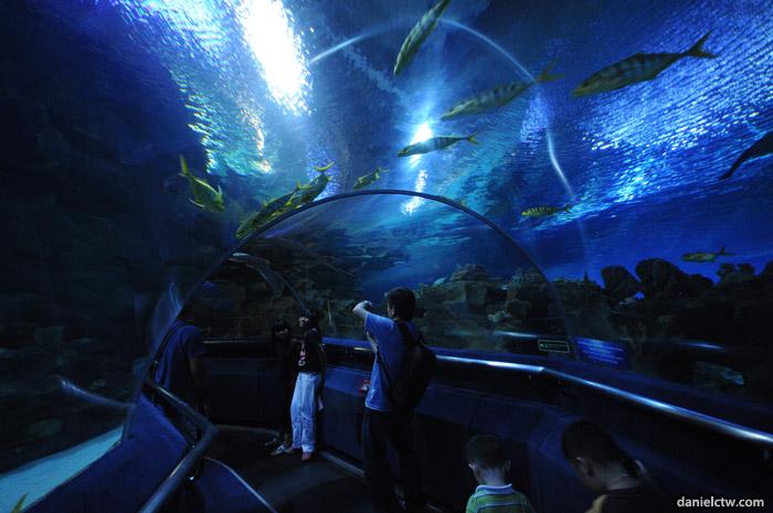 Visit To Aquaria Klcc Daniel Chew The Wanderer