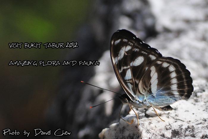 Butterfly Bukit Tabur