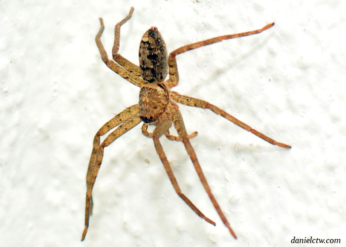 Spider Malaysia Creepy Crawly