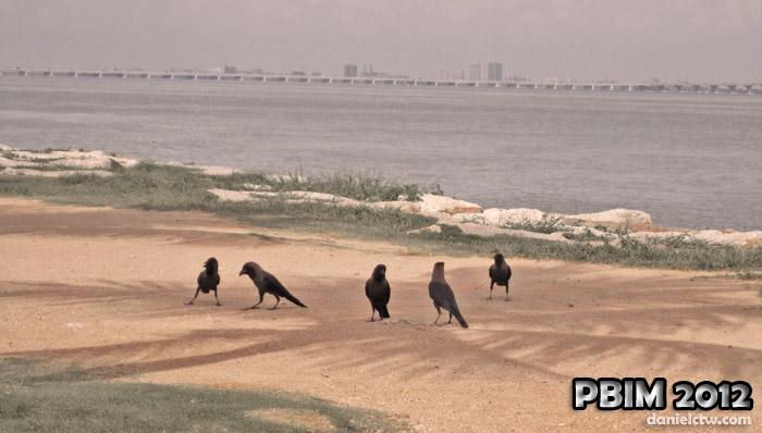 PBIM 2012 Crows