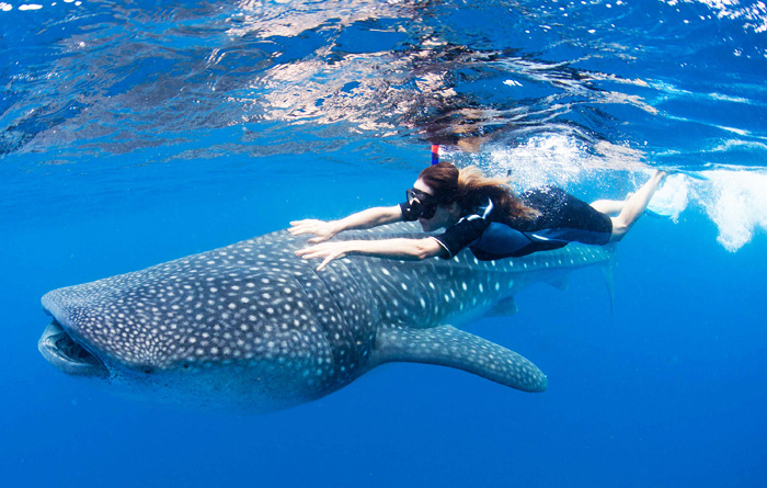 swimming with whale shark cancun