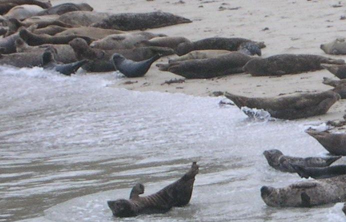 seal beach san diego