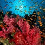 Travel & Relax at Fiji Island