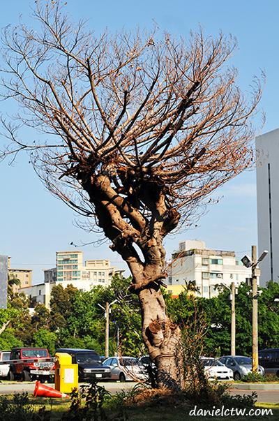 dried up tree hsinchu
