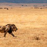 5 Safari Things You Must Definitely See